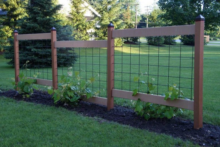 A beautiful grape trellis made with cattle panel
