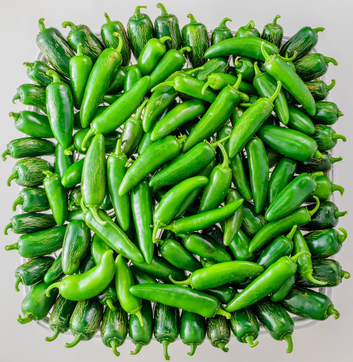 Jalapeno peppers harvested