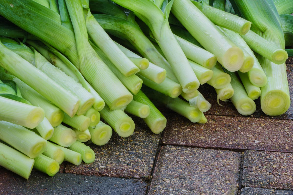 Leek grown organically.