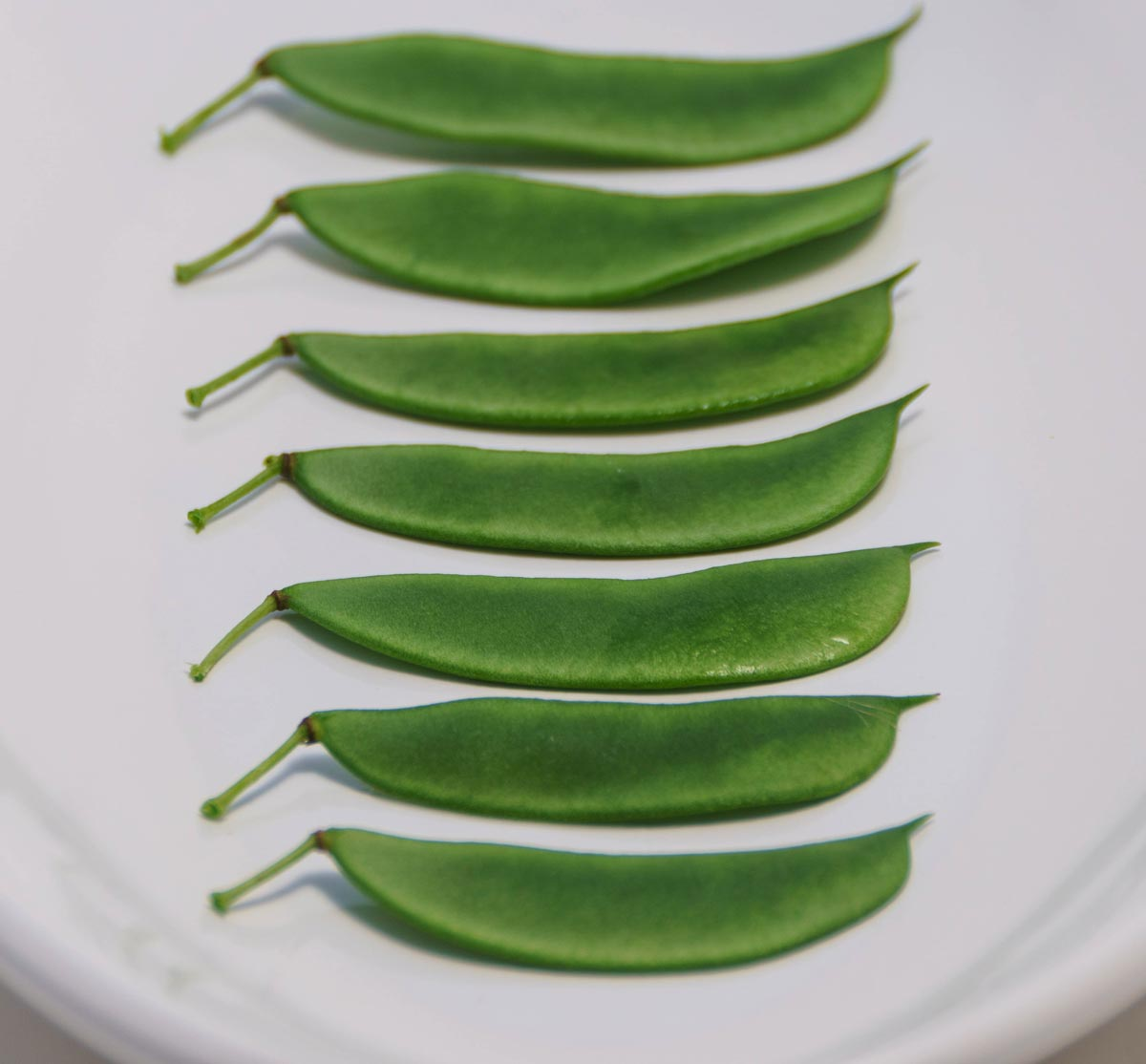 Henderson lima beans, harvested and arranged in a row
