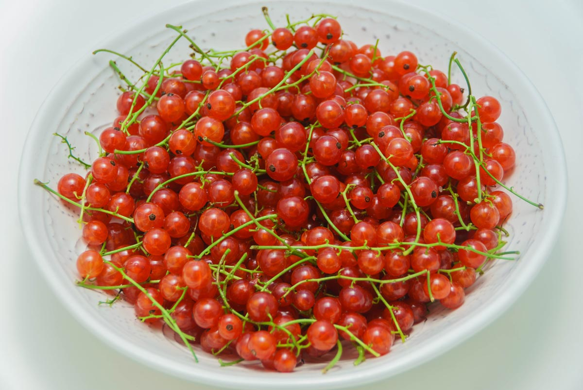 A plateful of red currants