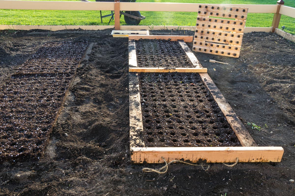 Template to place seeds in the garden. Planting template
