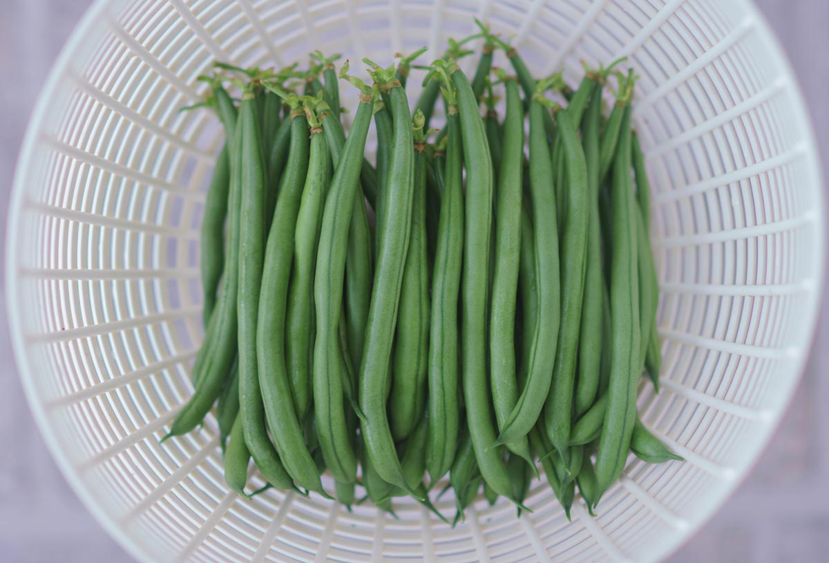 Seychelles pole beans harvested and cleaned