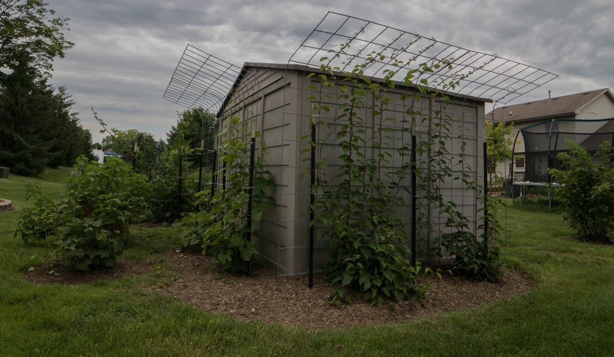 Trellis for grape and other vines