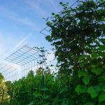 How We Use Trellises In Gardening